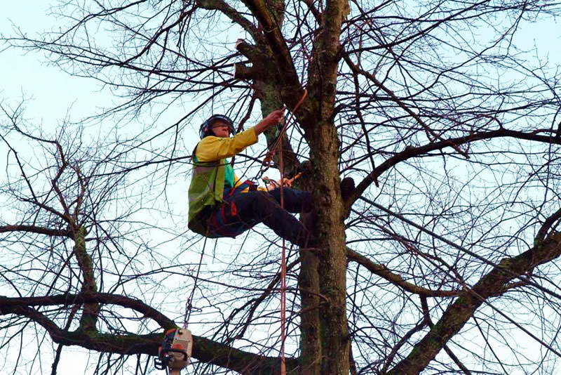 All Trees Cardiff Fully Qualified & Insured