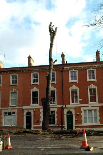 Experienced tree services in Cardiff