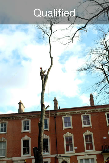 Qualified Tree Surgeons in Cardiff South Wales