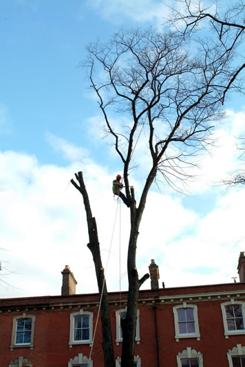 Stump removal and tree crown lifting in Cardiff