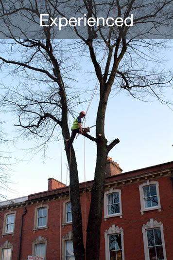 Fast Efficient Proffesional Tree Services in Cardiff