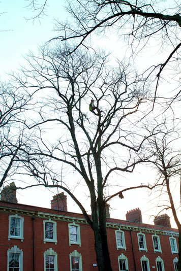 Local Council Tree Services