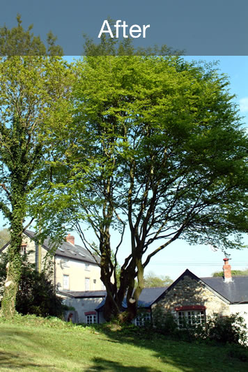 All Trees Trees services in North Cardiff
